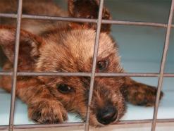 puppy-2-1379050